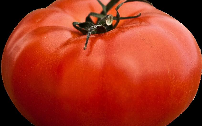 Variétés de tomates les plus productives : Sélection de 19 variétés