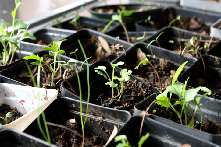 Faire ses semis en intérieur : Les 8 étapes fondamentales