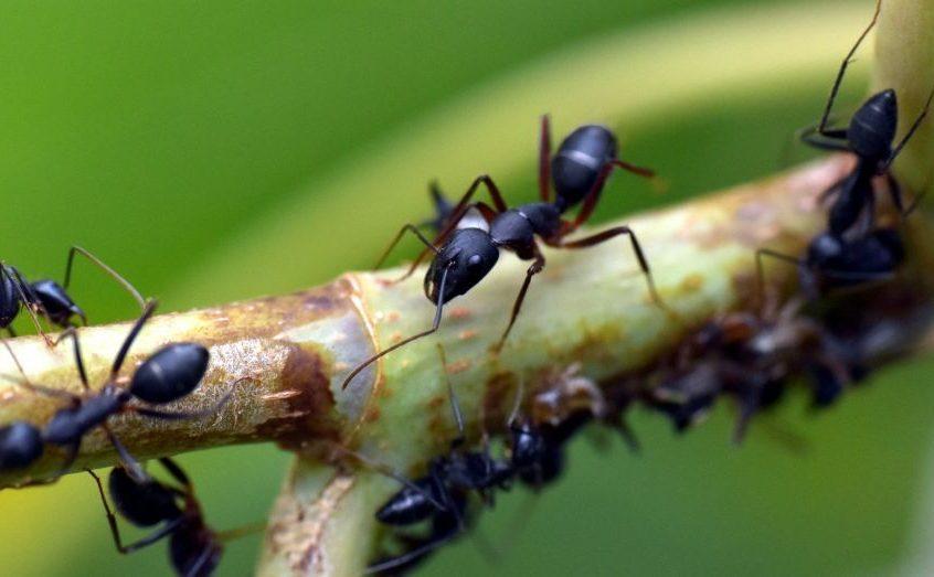 Jardin infesté de fourmis : 3 problèmes qui pourraient nuire à votre culture
