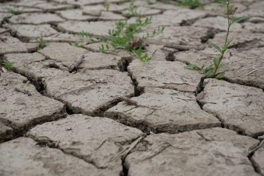 Rendre une terre argileuse plus souple, drainante et (ultra) fertile